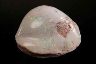 Aesthetic Precious Opal After Fossil Clam Shell Coober Pedy,  Australia