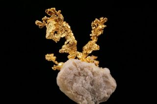 EXTRAORDINARY Native Gold Crystal Cluster on Quartz EAGLES NEST MINE,  CALIFORNIA 11