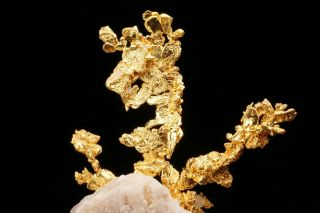 EXTRAORDINARY Native Gold Crystal Cluster on Quartz EAGLES NEST MINE,  CALIFORNIA 12