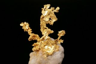 EXTRAORDINARY Native Gold Crystal Cluster on Quartz EAGLES NEST MINE,  CALIFORNIA 2