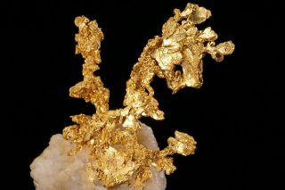 EXTRAORDINARY Native Gold Crystal Cluster on Quartz EAGLES NEST MINE,  CALIFORNIA 3