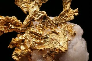 EXTRAORDINARY Native Gold Crystal Cluster on Quartz EAGLES NEST MINE,  CALIFORNIA 6