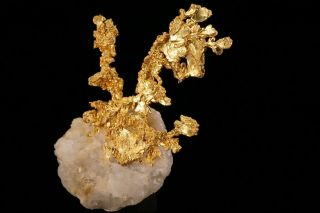 EXTRAORDINARY Native Gold Crystal Cluster on Quartz EAGLES NEST MINE,  CALIFORNIA 7