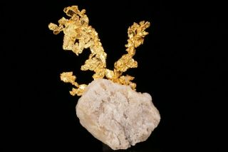EXTRAORDINARY Native Gold Crystal Cluster on Quartz EAGLES NEST MINE,  CALIFORNIA 9