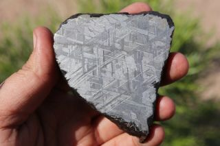 Muonionalusta Meteorite Etched Full Slice 244.  8 Grams Thick Great For Jewelry