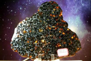 Sericho Pallasite Meteorite From Kenya Africa Habaswein 367.  7g Complete Slice