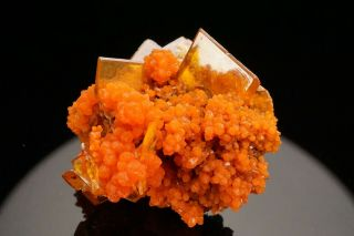 Aesthetic Wulfenite & Mimetite Crystal Cluster San Francisco Mine,  Mexico