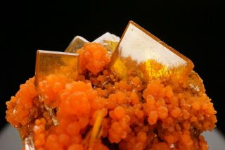 AESTHETIC Wulfenite & Mimetite Crystal Cluster SAN FRANCISCO MINE,  MEXICO 2