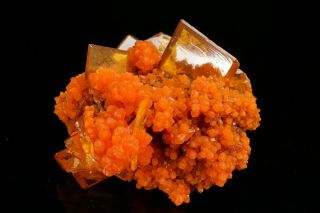 AESTHETIC Wulfenite & Mimetite Crystal Cluster SAN FRANCISCO MINE,  MEXICO 4