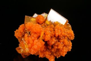 AESTHETIC Wulfenite & Mimetite Crystal Cluster SAN FRANCISCO MINE,  MEXICO 8