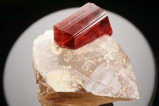 Extraordinary Gem Rubellite Tourmaline Crystal On Quartz Malkhan,  Russia