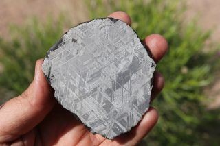 Muonionalusta Meteorite Etched Full Slice 172 Grams Thick Great For Jewelry