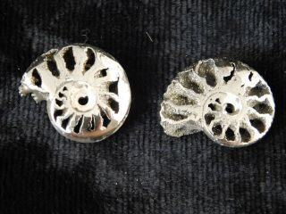 Two Little 100 Natural Polished Pyrite Ammonite Fossils From Russia 2.  54 E