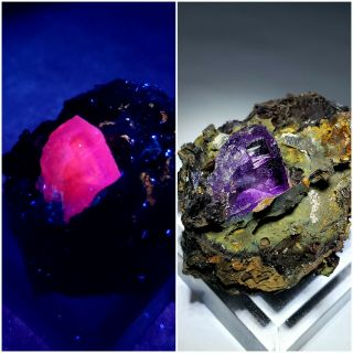 Shocking - Fluorescent Pink/purple Fluorite Crystals,  Ojuela Mine Mexico