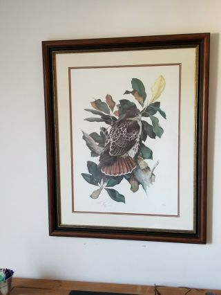 C Ford Riley Signed Rare Limited Edition Hawk Painting Print 89/250 From 1985