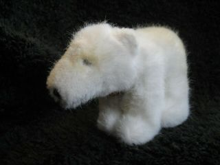 Rare 1981/83 German Steiff Polar Bear W.  Chest Tag Starly